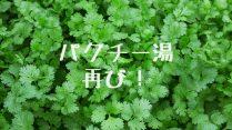 8/9は『パクチー湯』!<br>@月見湯温泉